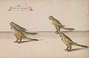 Entrée des quatre Perroquets - Daniel Rabel